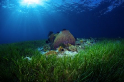 The beautiful sea grass beds of Cabilao. The sun was crea... by Steve De Neef